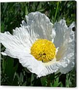 Sunny Side Flower Canvas Print