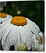 Sunny Sides Up Canvas Print