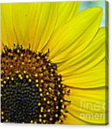 Sunny Summer Sunflower Canvas Print