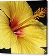 Sunny Yellow Hibiscus Flower Canvas Print