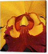 Sunny Yellow Orchid Canvas Print