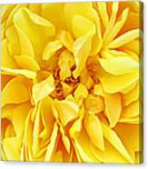 Sunny Yellow Rose With Petals And Stamens - Macro Flower Photography Canvas Print