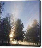Sunray Through Trees And Fog Canvas Print