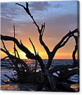 Sunrise At Driftwood Beach 5.2 Canvas Print