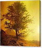 Sunrise Flare Canvas Print