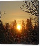 Sunrise In The Trees Canvas Print