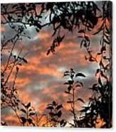 Sunrise Leaves Canvas Print