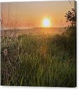 Sunrise On A Dew-covered Cattle Pasture Canvas Print