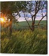 Sunrise On A Farm During The Summer Canvas Print