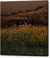 Sunrise On Wild Grasses II Canvas Print