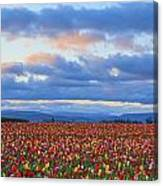 Sunrise Over A Tulip Field At Wooden Canvas Print
