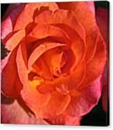 Sunrise Rose Canvas Print
