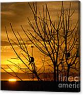 Sunrise Song Canvas Print