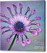 Sunscape Daisy Canvas Print