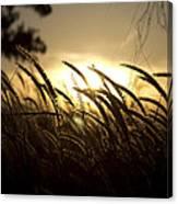 Sunset Behind Tall Grass Canvas Print
