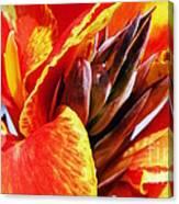 Sunset Floral Canvas Print