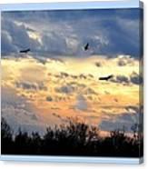 Sunset Of The Hawks Canvas Print
