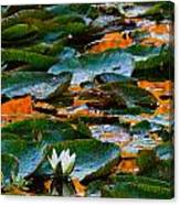 Sunset On A Lily Pond Canvas Print