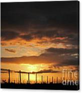 Sunset On The Vineyards Canvas Print