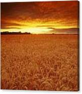 Sunset Over Wheat Field Canvas Print