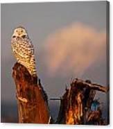 Sunset Owl Canvas Print