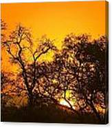 Sunset, Sabi Sand Reserve, Mpumalanga Canvas Print