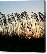 Sunset Sea Oats Canvas Print