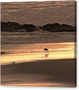 Sunset Shimmer Beach Canvas Print