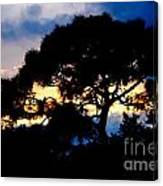 Sunset With Pine Tree Canvas Print