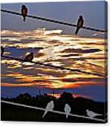 Sunsets And Birds Canvas Print