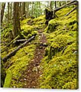Sunshine Coast Trail Canvas Print
