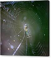 Sunshine On Swamp Spider Canvas Print