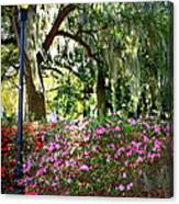 Sunshine Through Savannah Park Trees Canvas Print