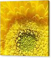 Sunshine Yellow Canvas Print