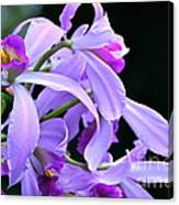 Super Orchid Canvas Print