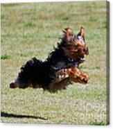 Super Yorkie Canvas Print