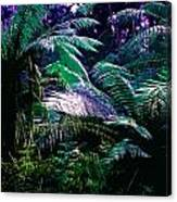 Surreal Tropical Forest Drawing Illustrated Scene Canvas Print
