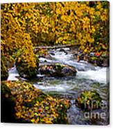 Surrounded By Autumn Canvas Print