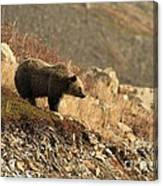 Surveying The Area Canvas Print