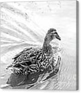 Susie Duck Canvas Print