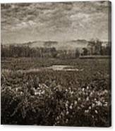 Suspended Over The Wetlands Canvas Print