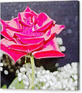 Suzannes Fantasy Rose Canvas Print