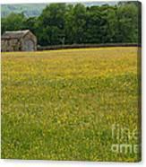 Swaledale Buttercup Meadow Canvas Print