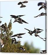 Swallows - All In The Family Canvas Print