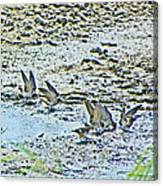 Swallows At The River Canvas Print