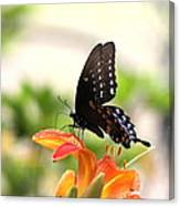 Swallowtail - Lite And Lively Canvas Print
