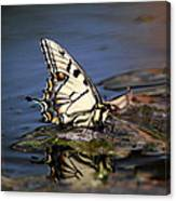 Swallowtail - Walking On Water Canvas Print