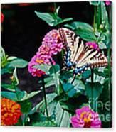 Swallowtail Among The Zinnias Canvas Print