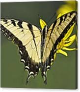 Swallowtail And Friend Canvas Print
