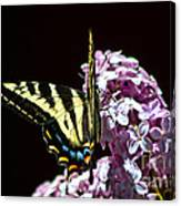 Swallowtail On Lilac 3 Canvas Print